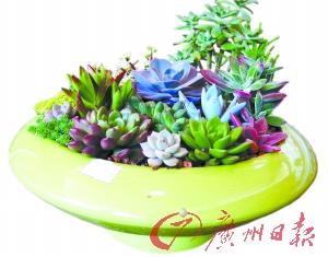 陶瓷盆栽。