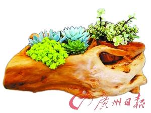 原木盆栽。
