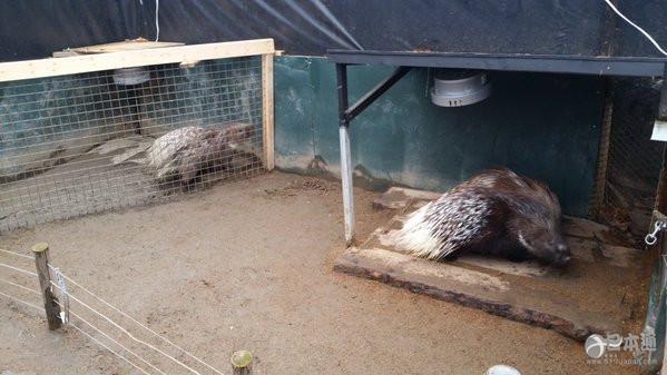 北海道疯狂动物城 入园先签生死状