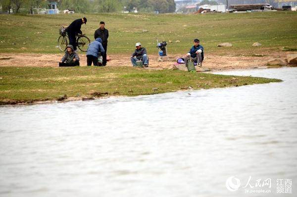 鄱阳湖顶托加上持续降水,赣江在枯水期仍保持高水位。 人民网南昌3月11日电(时雨)3月11日,本网在赣江南昌段秋水广场附近看到,相比往年的枯水期,今年赣江水位走高。据水文部门获悉,截至11日16时,赣江南昌段水位达到16.17米。 据水文部门介绍,从去年年底开始,持续的雨水天气,使得赣江南昌段水位一直处于较高的水平,再加上鄱阳湖高水位的顶托,赣江下泄的水流不像往年同期那么快速,使赣江在枯水期能保持高水位。据预计,在未来一周内,赣江的水位还将进一步提高。