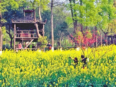 本报讯 (记者 傅柃畅)近日,网友在微博上报料:四川美术学院内油菜花图片