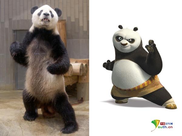 """功夫熊猫:日本动物园熊猫秀""""武艺""""萌翻众人"""