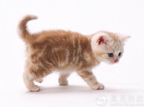 猫 跑步 手绘 素材