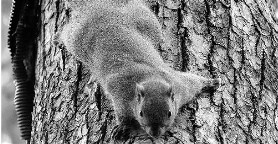 承德哪有一个松鼠雕像