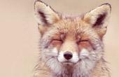 话剧《狐狸小晶》