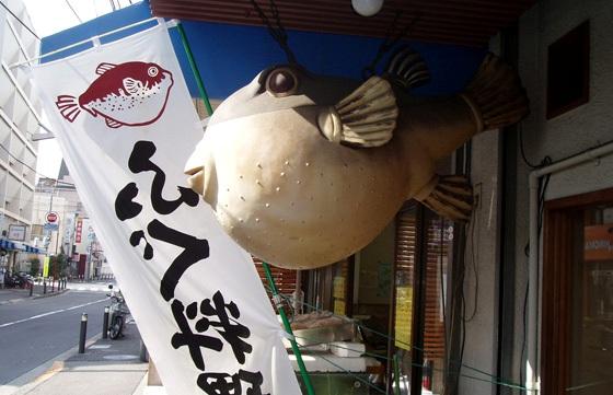 日本人拼死吃河豚 一个人花费500甚至上千元