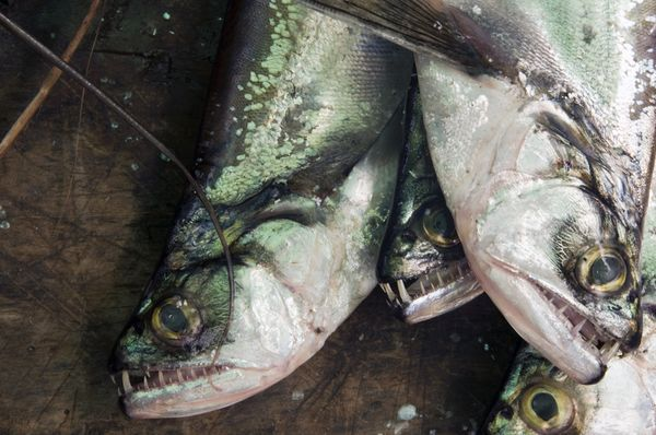 淡水河隐藏的危险 盘点令人恐惧的淡水动物