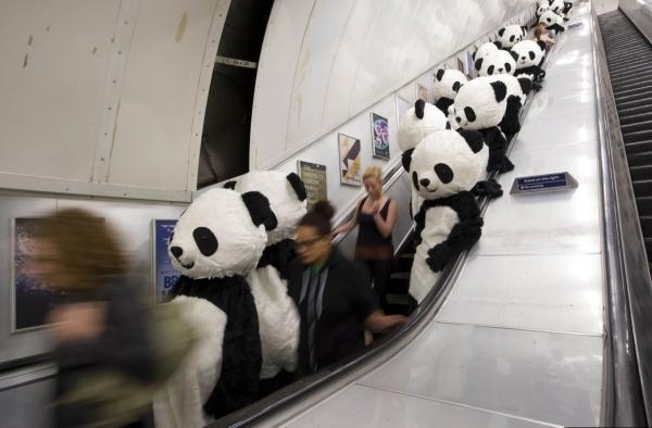 伦敦街头百人装扮大熊 呼吁保护野生动物 (9/10)