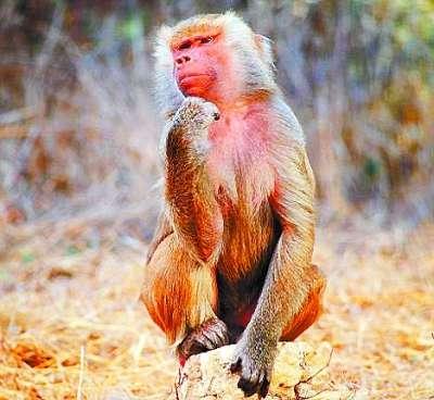 以下几种动物的大脑是世界上最奇异和有趣的大脑.