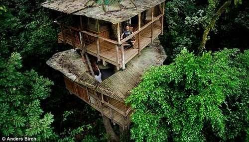 美国夫妇历时5年打造雨林树屋村落(组图)
