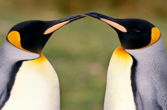 哺乳动物选择一夫一妻制未解之谜