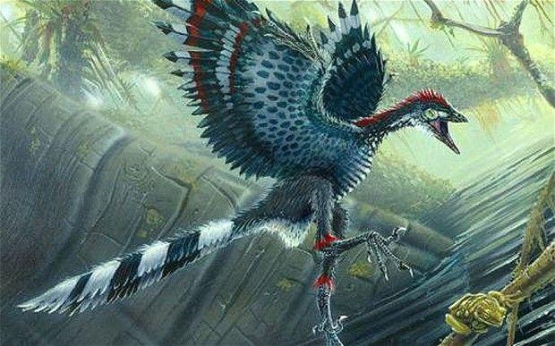 凤凰科技讯 北京时间8月5日消息英国每日电邮报道,一项最新的研究显示,对有羽毛但无飞行能力的恐龙头颅的分析显示,它们进化出较大的大脑,这或为它们天空飞行铺平道路。 科学家发现爬行动物的大脑非常类似于生活在1.5亿年前的始祖鸟,这意味着其它无法飞行的恐龙可能已经通过发展能够飞行的大脑而迈出了变成现代鸟类的重要进化学跳跃。 尽管鸟类的大脑在俚语里常被用于指代愚蠢,但相对身体大小,鸟类拥有相对大的大脑。这在前脑处表现非常明显,后者提供了飞行必备的良好视力和协调能力。 现在始祖鸟身上的同样特征被发现存在于大