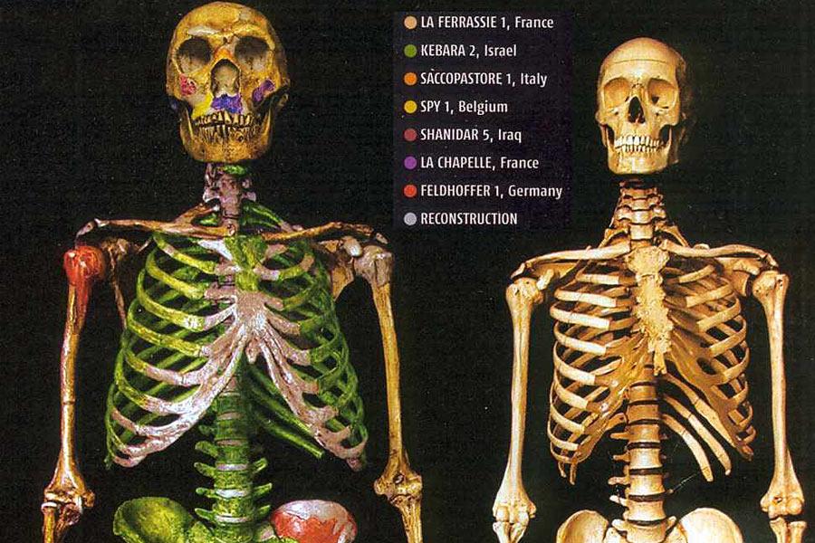 但人类与尼安德特人的关系并没有终结。我们的祖先大约于6.5万年前到达欧亚大陆,并与尼安德特人交配。2010年,基因测序发现,欧洲人和亚洲人的基因组里携带着尼安德特人的基因,除非洲以外的人类DNA有1.5%-2.1%的来源于尼安德特人。
