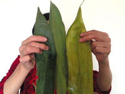 铜含量较高的两种鲜粽叶(左、中),水煮后依然保持青绿色。