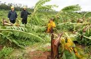 五:海南将修复台风损毁林地 完成植树造林15万亩
