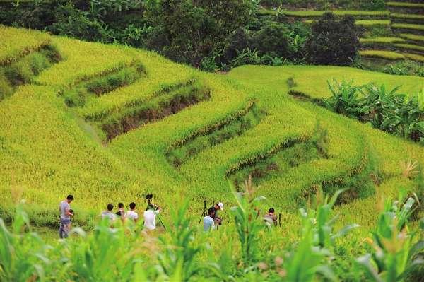 客户端 海南  海南省五指山市毛阳镇牙防村1100多亩的牙胡梯田,是当地