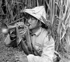 1950年台湾国军训练照