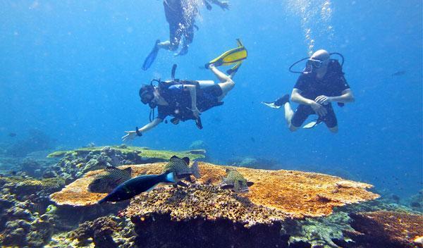碧海青天深蓝潜蓝:诗巴丹潜水掉进上帝的鱼缸