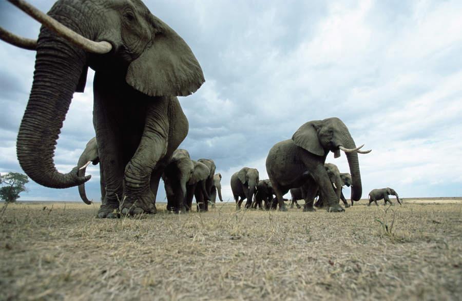 动物大迁徙:大自然的壮观[高清大图]