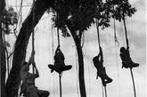 1943年10月14日 中国人用猴子战术迷惑日军,中缅印战区。