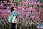 在那桃花盛开的地方 四川汉源赏万亩桃花