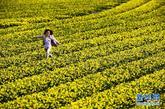 4月8日,一个孩子在荷兰西部小镇丽瑟附近的郁金香花田里奔跑。新华社发(罗宾·于特雷西特摄)
