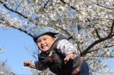 4月8日,两岁的小朋友邱添(上)和爸爸在樱花林中玩耍嬉戏。新华社记者李俊东摄