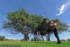 边打高尔夫边旅行 十大高尔夫度假目的地