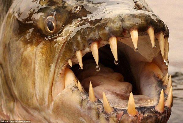 """""""河怪猎人""""全球最丑鱼类"""