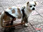 """遂川有个""""狗坚强"""":车祸后单腿架轮椅前行"""