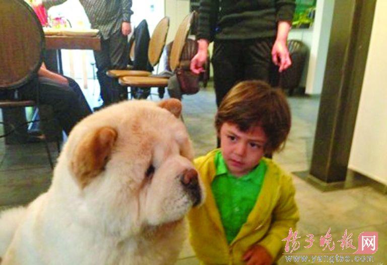 老婆与狗的情色生活_刘烨晒混血儿子和狗 萌照遭网友疯狂调侃