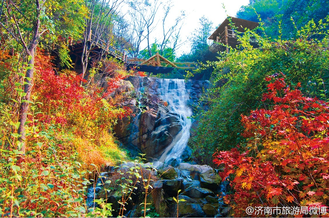 踏着秋天的脚步 观赏济南九如山多彩枫叶