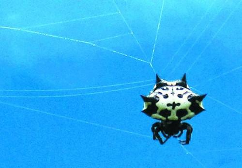 一只虫子白底头像动态