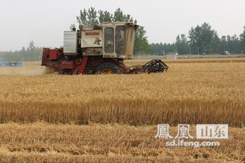 定陶 三夏 时节收麦忙 丰收在望农民乐