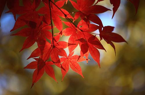 枫叶怎么拍 秋季枫叶摄影指南 - 抚水浮云 - 抚水浮云的博客