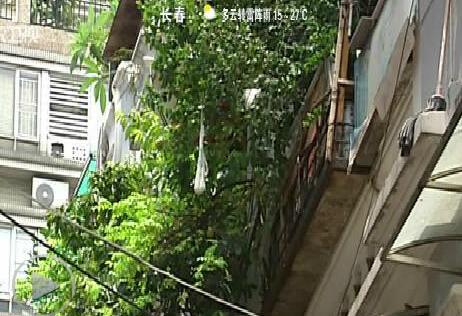 广州已有7个区出现登革热病例