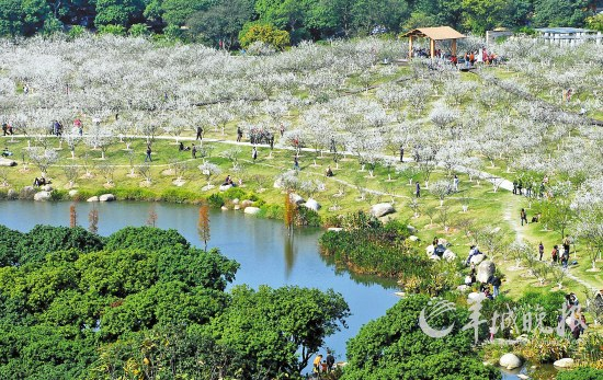 萝岗香雪公园,一片生机勃勃景象