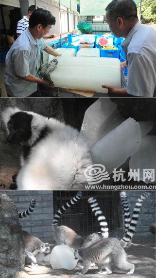 动物冰块模具图片