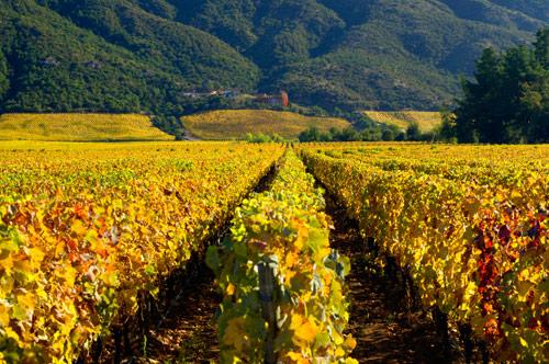 智利洗浴_第一届智利顶级美酒展现身上海