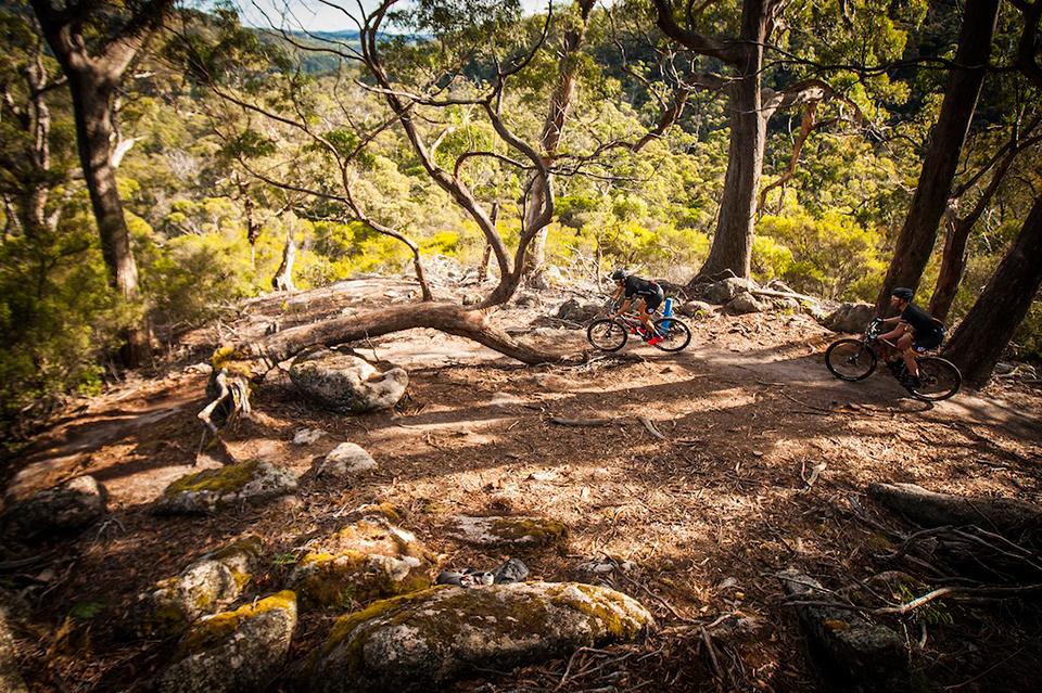 骑行澳大利亚(下)穿越古老森林图片