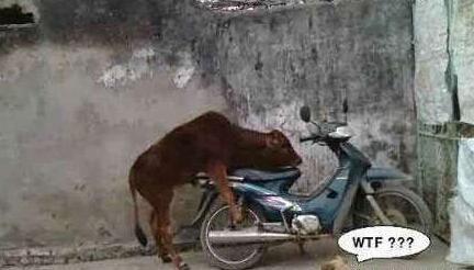 老牛你在干什么!