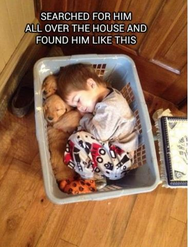 有问过狗狗乐意吗?