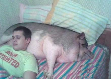 哈哈,枕头如何!