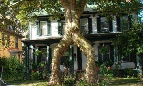 你确定你是一棵树?