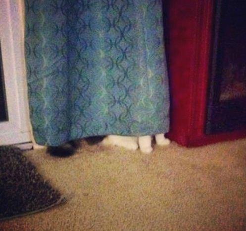 躲猫猫大师