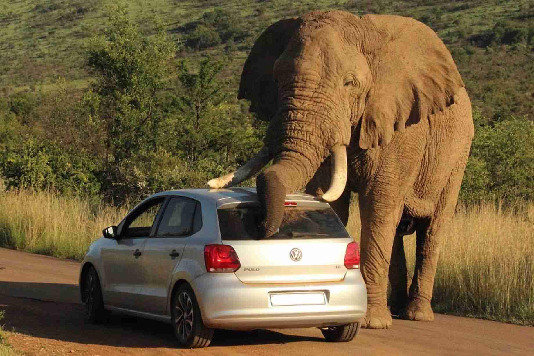 壁纸 大象 动物 1840_1227