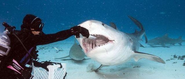 惊悚150203:让你见识鲨鱼嘴里是什么样 胆小勿点