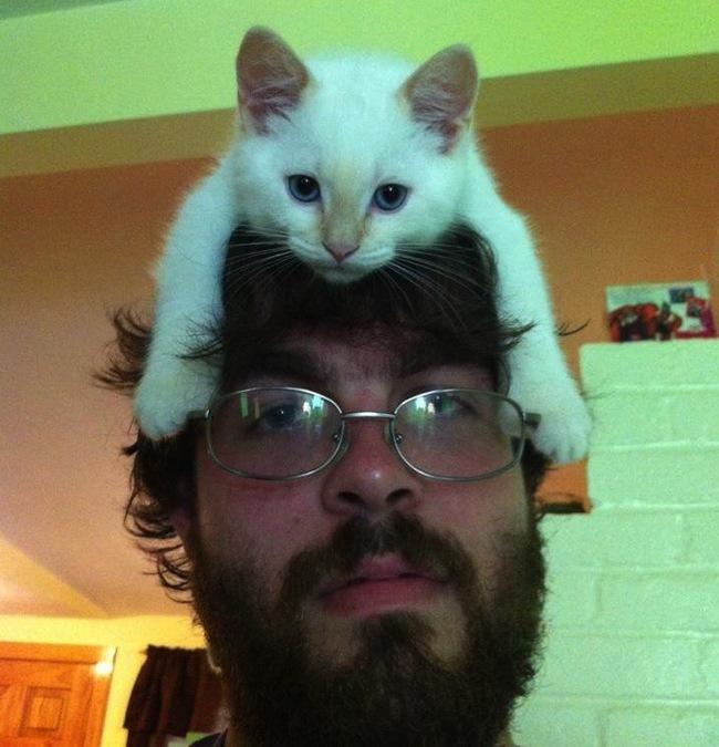 戴帽子萌猫照片大全可爱