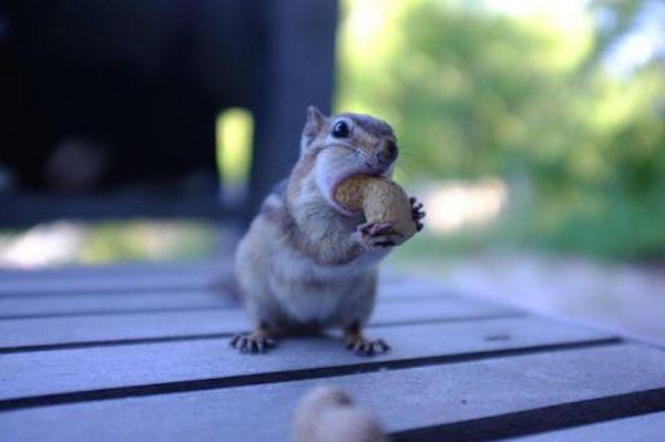挣扎于人类食物的小动物 你也想站在食物链顶端?