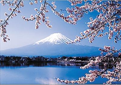 位于日本富士山景区的青木原森林植被茂密